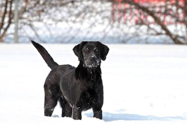 Henry enjoying the snow!