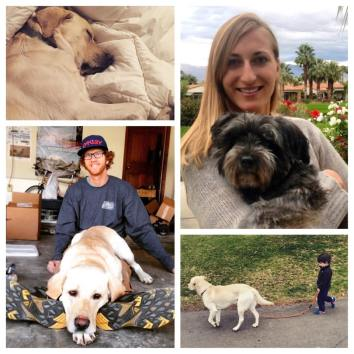 The owners with their happy pooches!