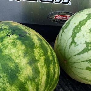 My melons from the Lexington Farmers Market!