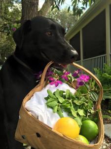 He was such a gentleman...he carried my basket and helped me collect inspiration for this weeks drink!